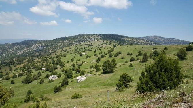Dinar'da Orman Rehabilitasyon Çalışmaları