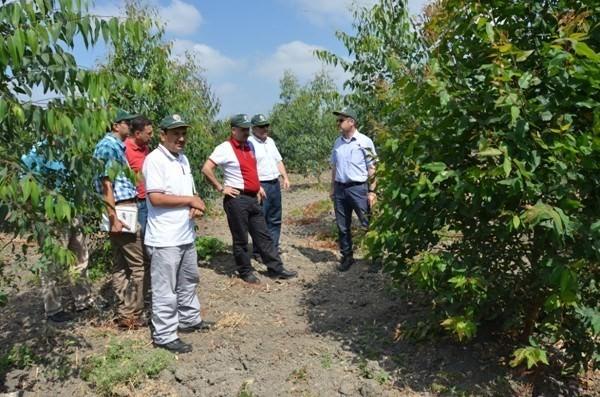 Okaliptüs Endüstriyel Plantasyon Çalışmalarında Hedef Yıllık 100 Hektar