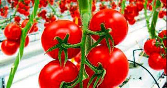 Toptancı Hal'de domates zamlandı