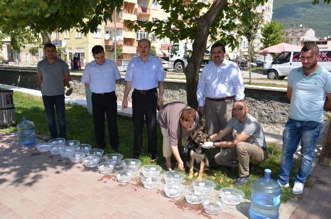 Gemlik Belediyesi Sokaktaki Hayvanları Susuz Bırakmayacak