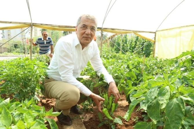 Mezitli Belediyesi Aşevi'ne Gönüllü Desteği