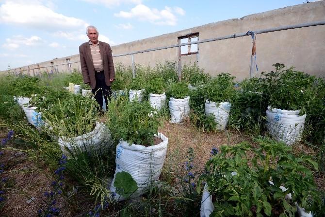 Patatesleri UN Çuvalında Yetiştiriyor