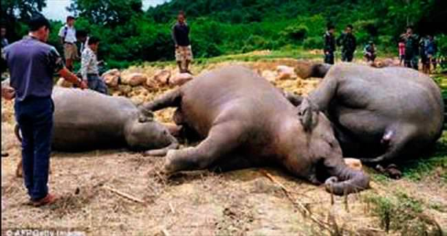 3 fili öldüren çiftçi tutuklandı