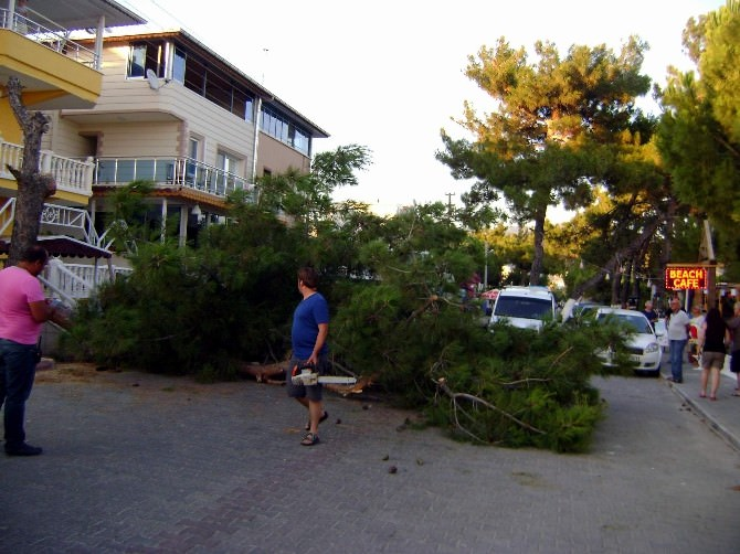 Didim'de Devrilen Ağaç Yolu Trafiğe Kapattı