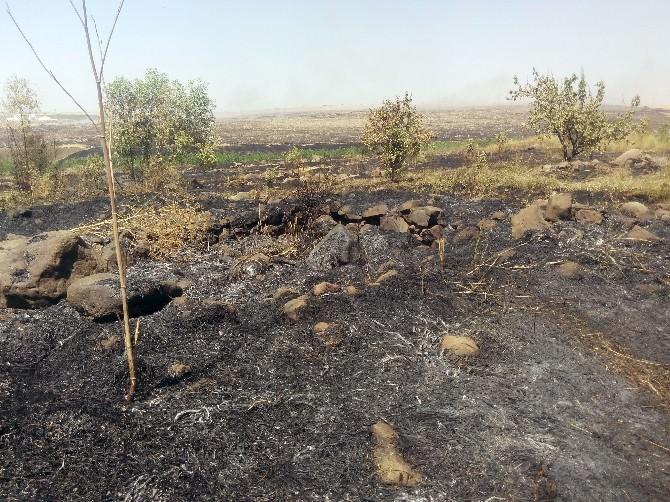 Siverek'teki Yangında 5 Bin Ağaç Zarar Gördü