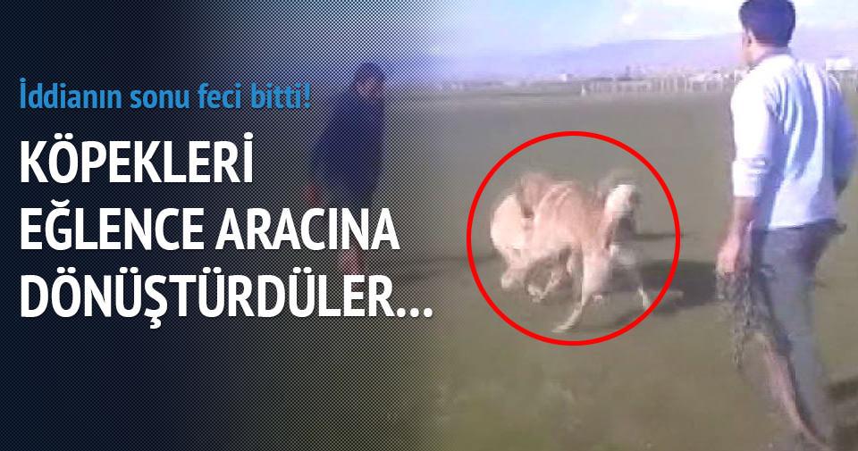 İddia üzerine köpekleri dövüştürdüler!