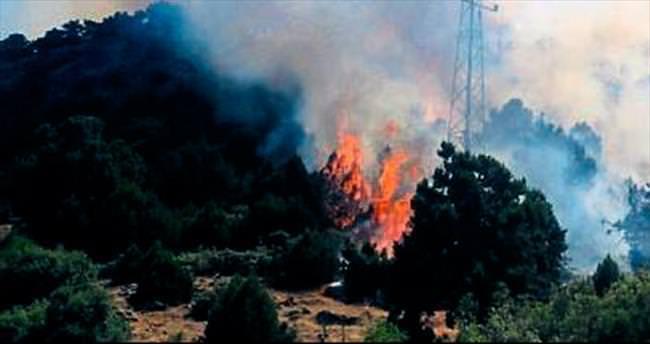 10 hektarlık orman yandı