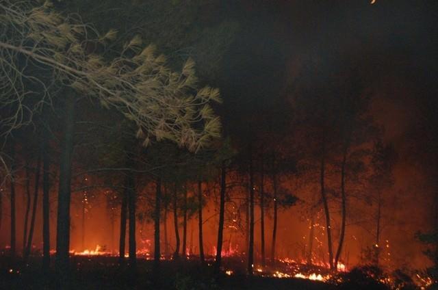 """Orman Bölge Müdürü Erol: """"Yangın Riski Artarak Devam Edecek"""""""