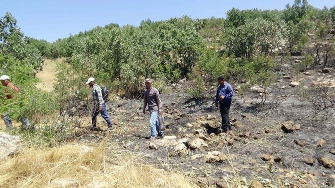 Kulp'taki Yangının Büyüklüğü Gün Ağarınca Ortaya Çıktı