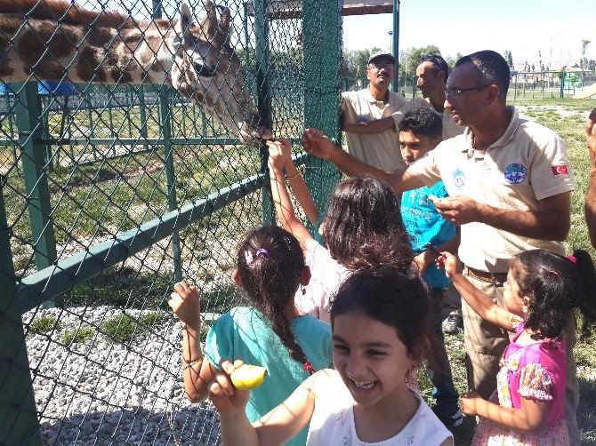 Zürafa Yavrusunun Doğum Günü Kutlandı