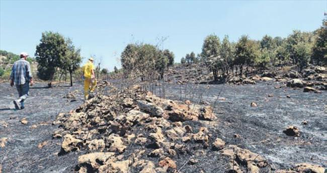 Diyarbakır'daki orman yangını söndürüldü