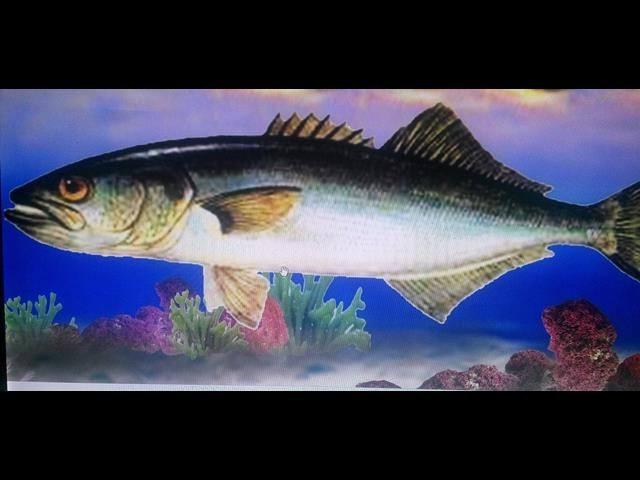 Balık Resimleri Limanın Duvarlarını Süsleyecek