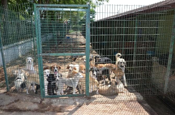 Barınakta Hayvanların Tıbbi Rehabilitasyonu Yapılıyor