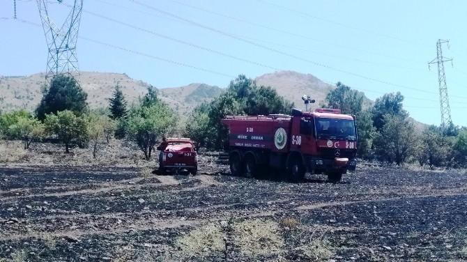 Elektrik Akımına Kapılan Karga Yangına Neden Oldu