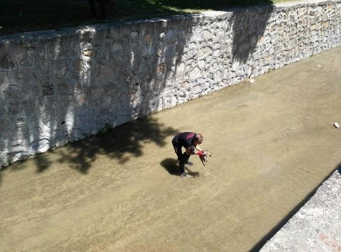 Kanala Düşen Kediyi İtfaiye Ekipleri Kurtardı