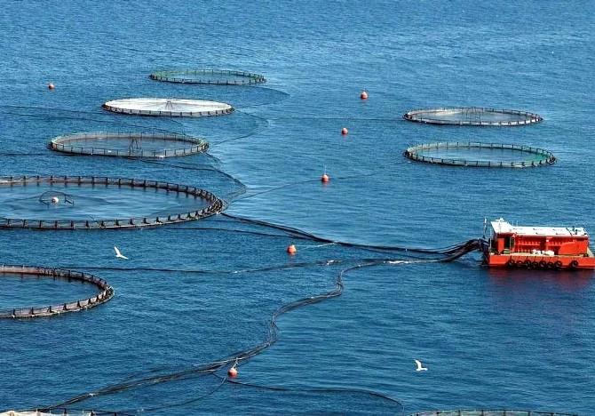 Su Ürünleri Sektörünün Geleceği Yetiştiricilikte