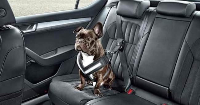 Skoda köpekleri böyle koruyacak