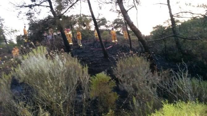 Milli Park Bölgesinde Çıkan Orman Yangını Büyümeden Söndürüldü