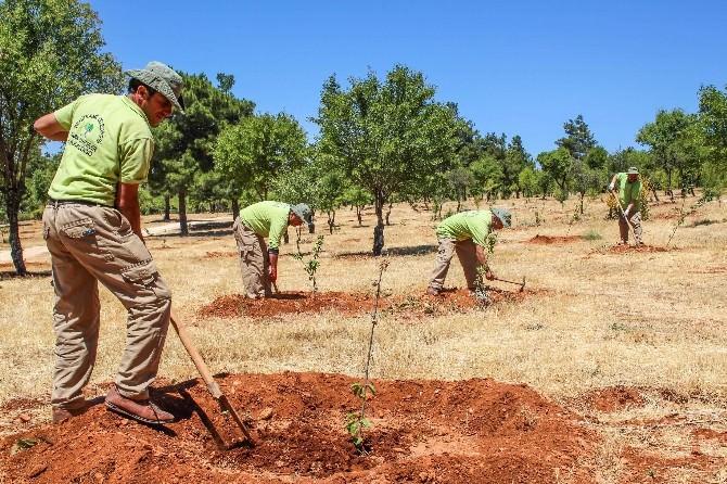 Şehitkamil Belediyesi'nin Örnek Projesi Meyve Verdi