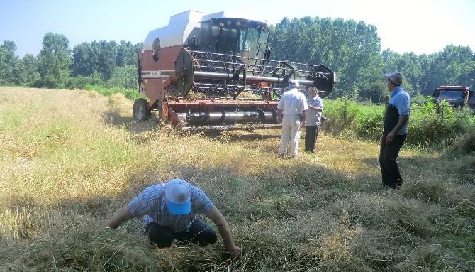 Buğday Hasadı Kontrolleri Yapılıyor