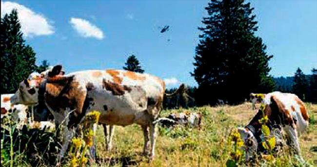 Ordu, ineklerin yardımına koştu