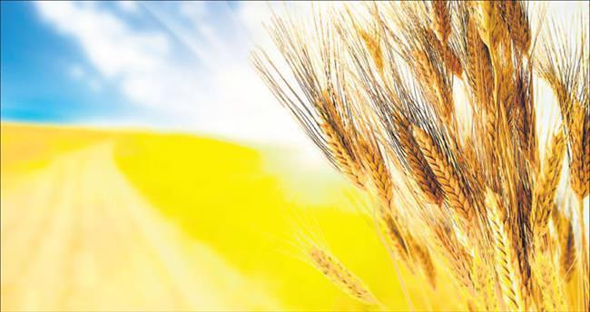 Buğdayda hayal kırıklığı