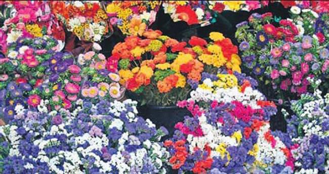 Adana, Hollanda'ya çiçek ihraç edecek