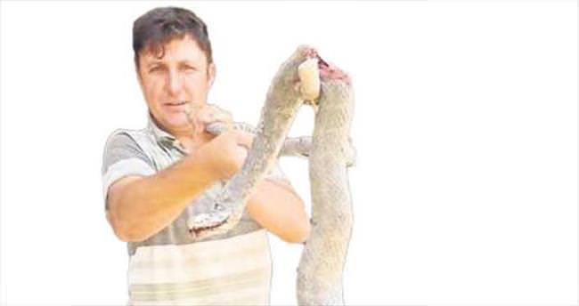 Gazipaşa'yı yılan bastı