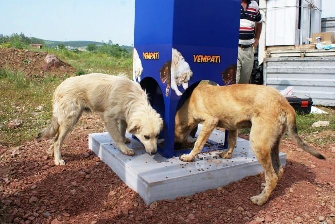 Kocaeli'de Kavurucu Sıcaklarda Sokak Hayvanları Aç Ve Susuz Kalmıyor