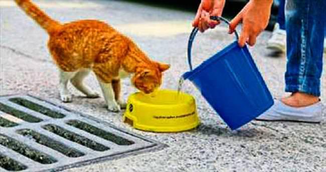 Hayvanlar için bir kap su uyarısı