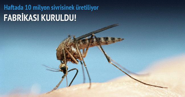 'Sivrisinek fabrikası' kuruldu