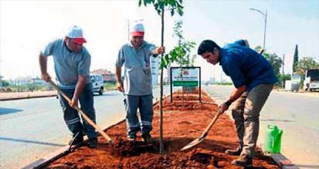 Belediye Başkanı turunç ağacı dikti