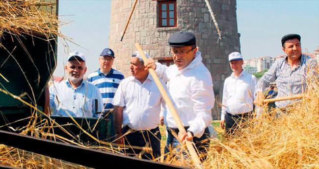 Başkentin en doğal hali Altınköy'de hasat vakti