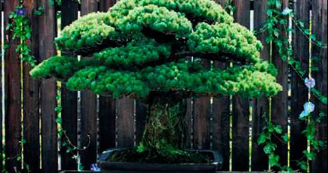 Hiroşima'dan sağ çıktı, 390 yaşında