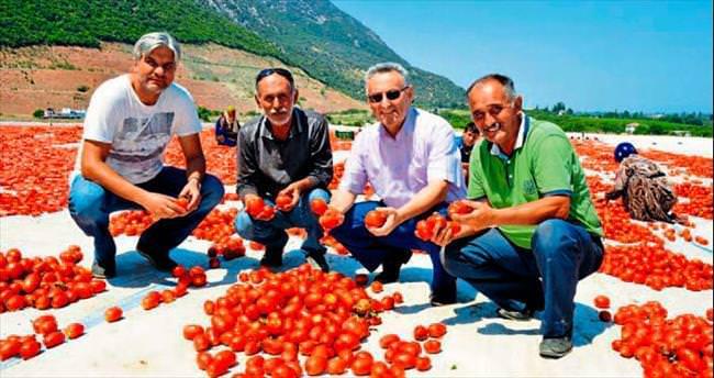 Avrupa, Manisa domatesi istiyor