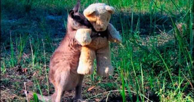 Yetim kanguruya oyuncak ayı...