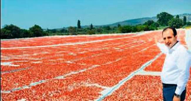 Üreticinin gelir kapısı kurutulmuş domates