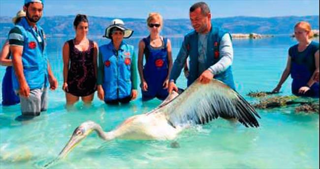 İyileştirilen pelikan doğaya bırakıldı