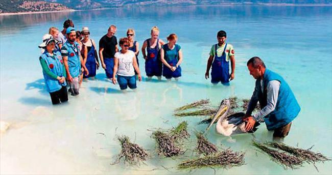 Tepeli pelikan Salda Gölü'nde