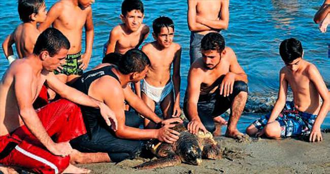Yaralı kaplumbağa tedaviye alındı