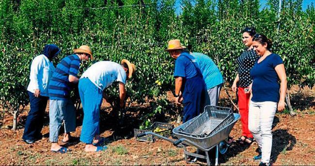Meyve ağaçlarıyla şifa buluyorlar