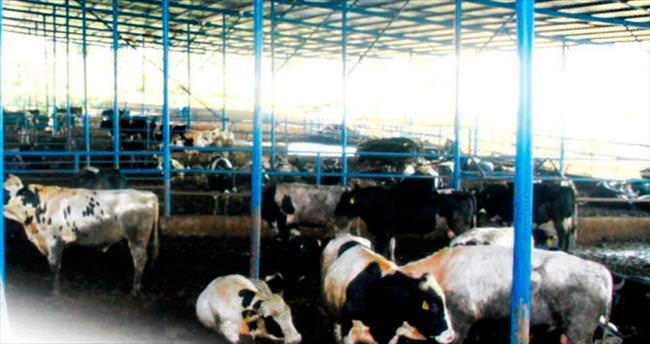 Üreticiler ESK'ya çoban olmak istiyor