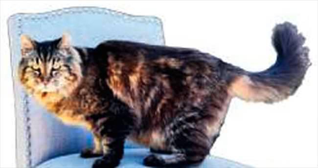 26 yılla en yaşlı kedi