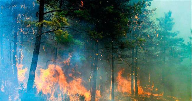 50 hektar kızıl çam ormanı kül oldu