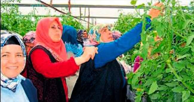 Elmalı'da domates yetiştiriciliği kursu