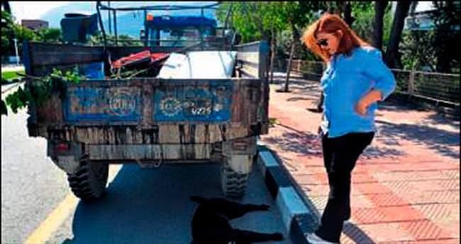Manisa'da toplu hayvan katliamı