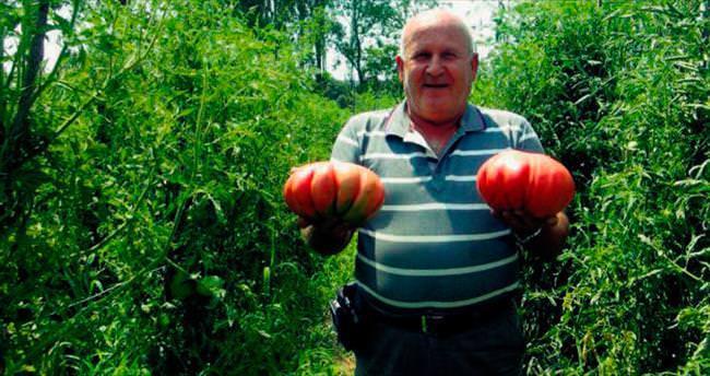 Bu domates tam 2 kilo