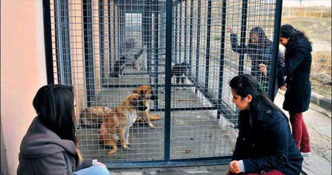 Mamak'ta yüzlerce sokak hayvanına yuva bulundu