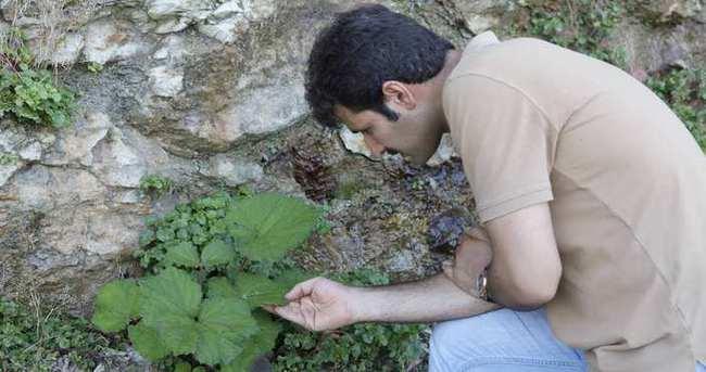 Sigara içenler için altın değerinde bitki