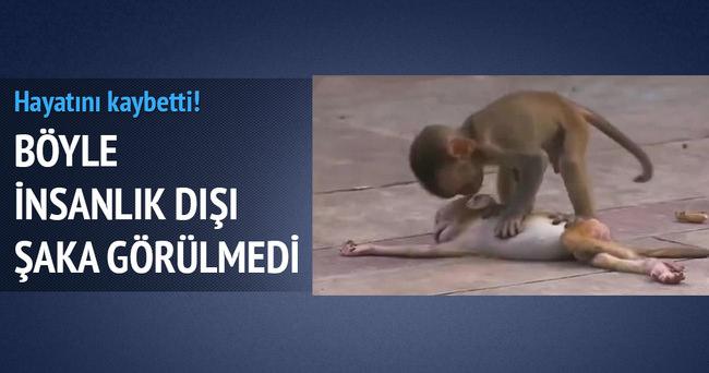 Maymuna böyle şaka yaptılar